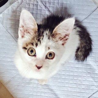 わんぱくお嬢様}【ΦωΦ】{遺棄猫保護