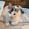 わんぱくお嬢様}【ΦωΦ】{遺棄猫保護 サムネイル3
