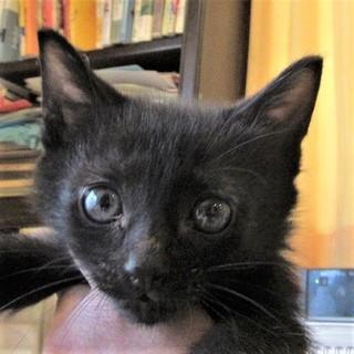 人馴れ抜群 黒猫王子