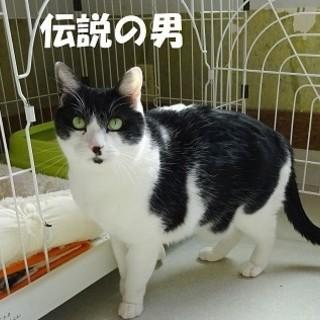 ケージ生活4年☆早く家猫になりたい☆