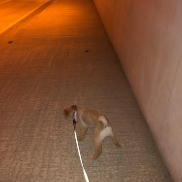 台風なのでトンネルでお散歩(^ω^)