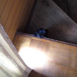 階段登れた