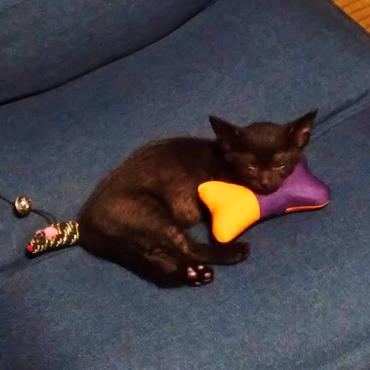 骨型のおもちゃを枕にする