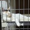 人慣れOK☆かわいい子猫のファミちゃん サムネイル3