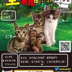 【野崎参道商店街】第13回里親会 サムネイル1