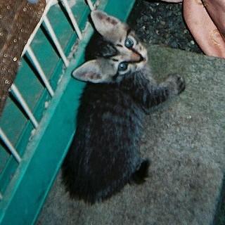 母猫と子猫の里親募集しています