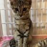 初心者OK!スリゴロキジトラメス猫@4ヶ月 サムネイル4