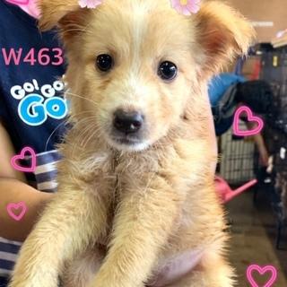 個体番号:W463 子犬ちゃぁーん