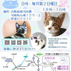 第14回  保護猫の里親会
