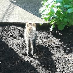 家の庭に仔猫が2匹サムネイル