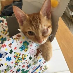 猫風邪による結膜の癒着