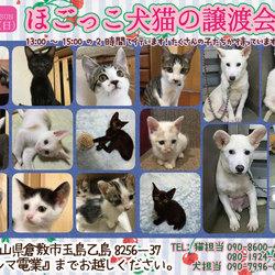 保護っこ犬猫譲渡会★倉敷市玉島
