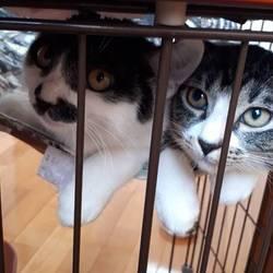 子猫  本日譲渡会の開催日です!