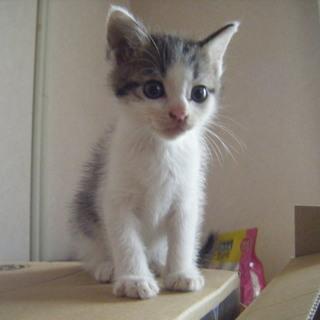 生後1か月の可愛い子猫