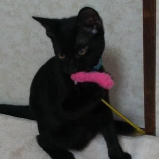 黒猫 甘えん坊な のぞむくん3ヶ月