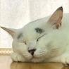 保護猫広場ラブとハッピー9月からの営業日
