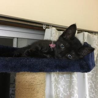 とっても美猫な黒猫さん!メス2ヶ月