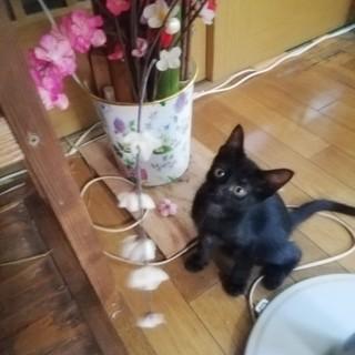 かわいい子猫もらって下さい