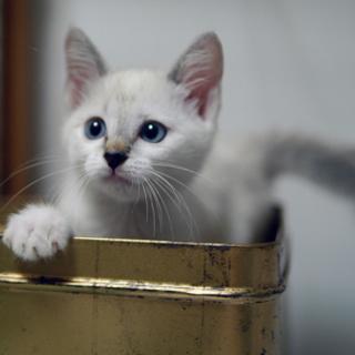 淡いブルーの瞳の貴公子♥二ヶ月位