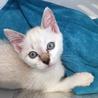 淡いブルーの瞳の貴公子♥二ヶ月位 サムネイル2