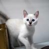 淡いブルーの瞳の貴公子♥二ヶ月位 サムネイル3