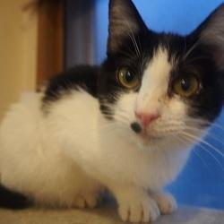 猫のはこぶね里親会&自動販売機募金 サムネイル2