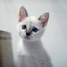 淡いブルーの瞳の貴公子♥二ヶ月位 サムネイル6
