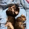 子猫 サムネイル2