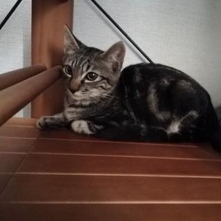 子猫ちゃん募集中(^^)