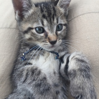 キジ猫 J ジェイ君