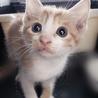 さいたま市動物愛護ふれあいセンターにて「保護ネコ譲渡会」開催