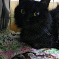 半長毛  黒猫❤️まるちゃん