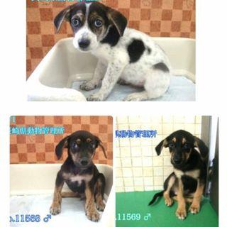 6兄妹!3ヶ月の子犬達を助けてあげてください!