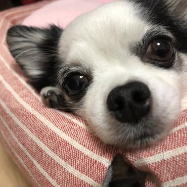 マロの写真