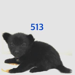 可愛い子犬たちの家族募集中☆513番