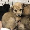 可愛い子犬たちの家族募集中☆514番