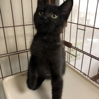 生後3ヵ月の雄の黒猫ちゃん