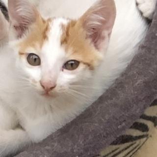 両耳にチャームポイントがある猫ちゃんです♪
