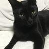黒猫のあずきです