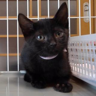 穏やかな黒子猫 みいちゃん