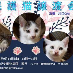 9/14(土)保護猫 里親譲渡会 サムネイル1