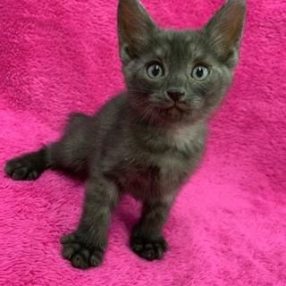 子猫の里親さんを探しています!