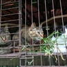 山羊猫たちの朝食