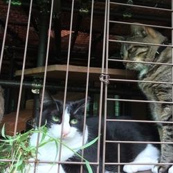 「山羊猫たちの朝食」サムネイル3