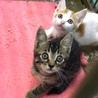 生後2ヶ月程度の愛らしい子猫たち
