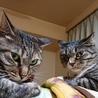 コワモテ猫姉妹