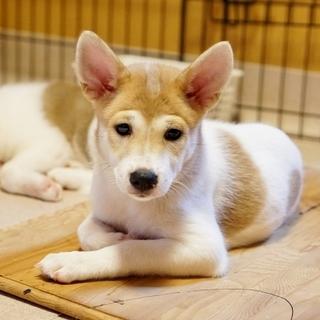 まるまる、やわらか!可愛い仔犬の兄妹6匹です。