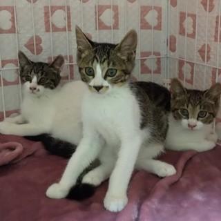 兄妹猫、シナモンちゃん・クッキー君・プリン君