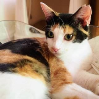 【マリンバ】小柄でかわいらしい若三毛猫♪