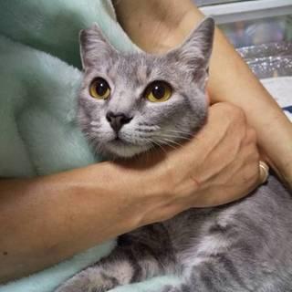 おとなしいスリスリ猫 メグ メス 1歳